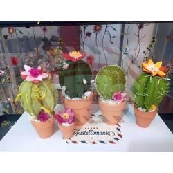 Fustella M Cactus in fiore